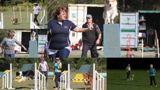 Port Macquarie Dog Club Obedience, Agility and Competitive Dog Training--